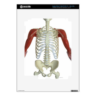Muscles of the Shoulder 2 iPad 3 Skin