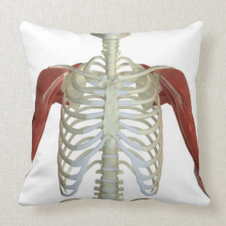 Muscles of the Shoulder 2 Throw Pillow
