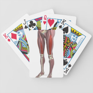 Muscles of the Thigh Bicycle Playing Cards