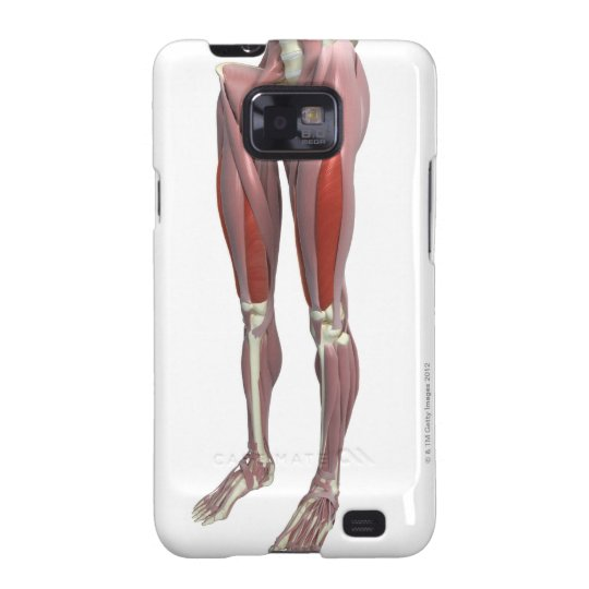 Muscles of the Thigh Samsung Galaxy S2 Case