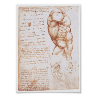 Muscles of the Torso, Leonarod da Vinci Poster