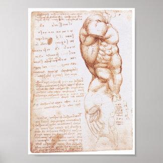 Muscles of the Torso, Leonarod da Vinci Poster