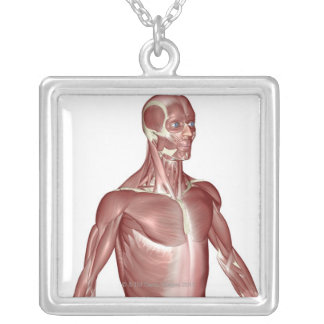Muscles of the Upper Body 2 Silver Plated Necklace