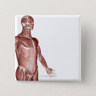 Muscles of the Upper Body 3 Pinback Button