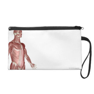 Muscles of the Upper Body 3 Wristlet Purse