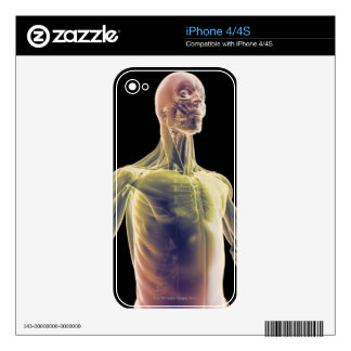 Muscles of the Upper Body iPhone 4 Skins