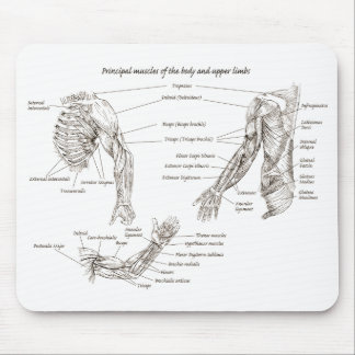 Muscles of the upper body mouse pad