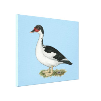 Muscovy Black Pied Duck Canvas Print