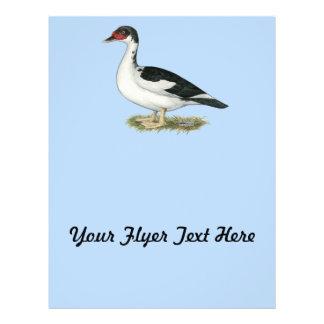 Muscovy Black Pied Duck Flyer