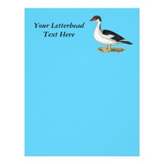 Muscovy Black Pied Duck Letterhead
