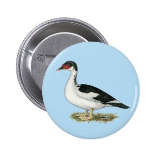 Muscovy Black Pied Duck Pinback Button