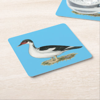 Muscovy Black Pied Duck Square Paper Coaster