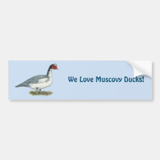 Muscovy Blue Pied Drake Bumper Sticker