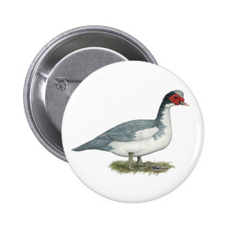 Muscovy Blue Pied Drake Button