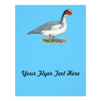 Muscovy Blue Pied Drake Flyer