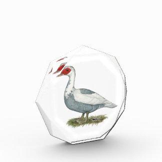 Muscovy Blue Pied Duck Acrylic Award