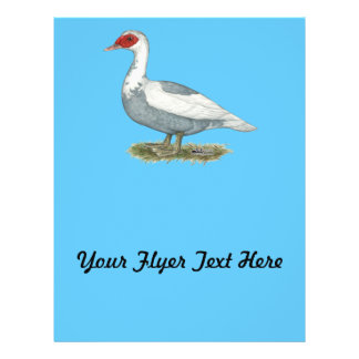 Muscovy Blue Pied Duck Flyer