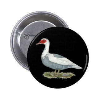 Muscovy Blue Pied Duck Pinback Button