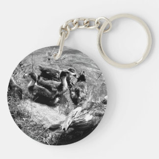 Muscovy duck hen and ducklings black and white keychain