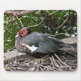 Muscovy duck mousepad