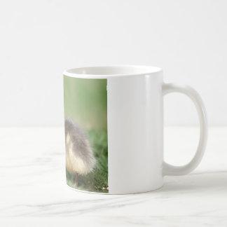 Muscovy Duckling Classic White Coffee Mug