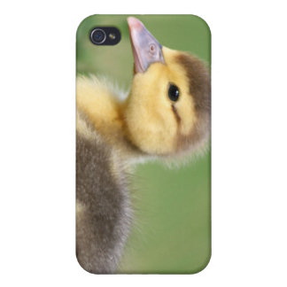 Muscovy Duckling Covers For iPhone 4