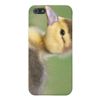 Muscovy Duckling iPhone 5 Covers