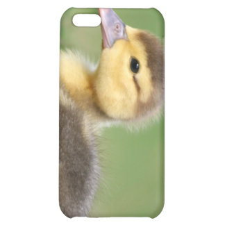 Muscovy Duckling Case For iPhone 5C
