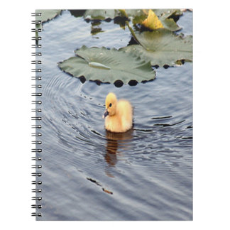 Muscovy Duckling Spiral Photo Notebook
