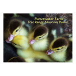 Muscovy Ducklings Business Cards