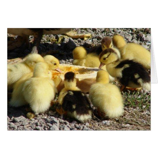 Muscovy Ducklings Eat A Treat Card