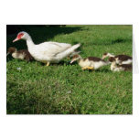 Muscovy Hen and Ducklings Card