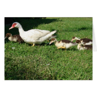 Muscovy Hen and Ducklings Cards