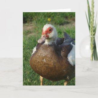 Muscovy Hen card