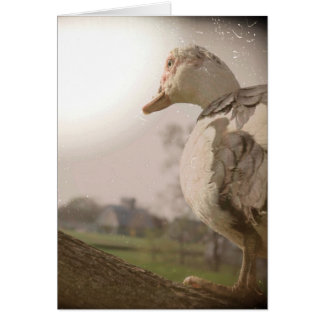 Muscovy Hen in a Tree Card
