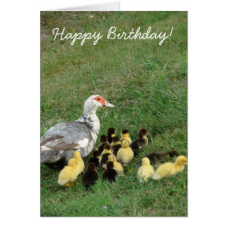 Muscovy Hen With Ducklings, Happy Birthday! Card