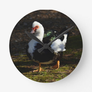 Muscovy hermoso Drakelet Relojes De Pared