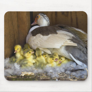 Muscovy Mousemats