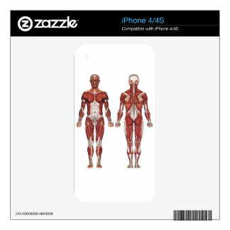 Muscular system, front and back skins for iPhone 4S