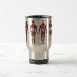 Muscular system, front and back travel mug