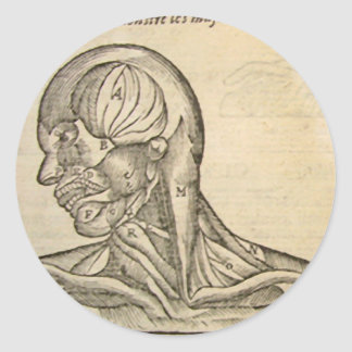 Musculature of the Head and Neck Classic Round Sticker