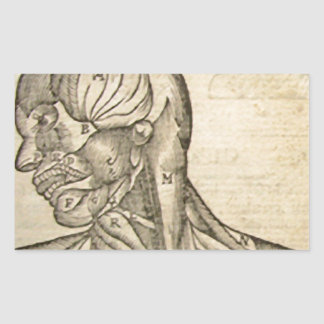Musculature of the Head and Neck Rectangular Sticker