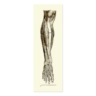 Músculos de la anatomía del vintage de la sepia de tarjetas de visita mini