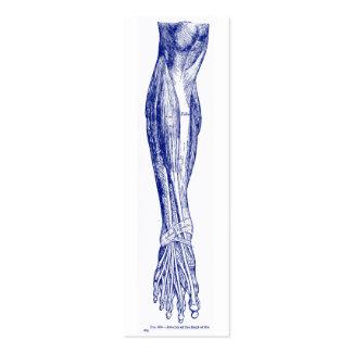 Músculos de la anatomía del vintage del azul de la tarjetas de visita mini