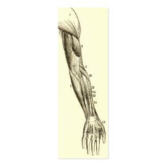 Músculos de la anatomía el   del vintage del brazo tarjetas de visita mini