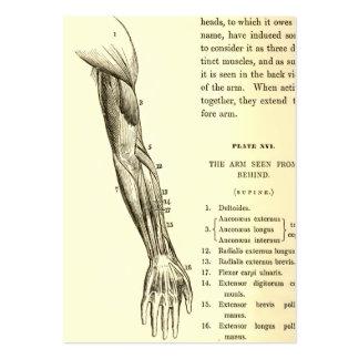 Músculos de la anatomía el | del vintage del brazo tarjetas de visita grandes
