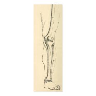 Músculos de la anatomía el |   del vintage y tarjetas de visita mini