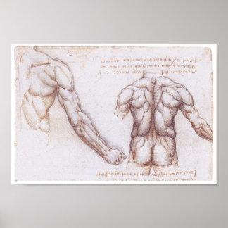 Músculos de la parte posterior, Leonardo da Vinci Póster
