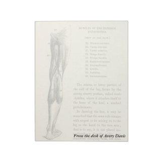 Músculos de la pierna de la anatomía el   del blocs de papel
