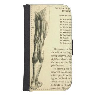 Músculos de la pierna de la anatomía el   del fundas cartera de galaxy s4